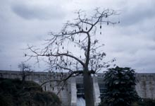 Tree in front of dam
